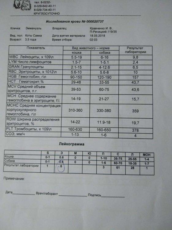 Общий анализ крови.jpg