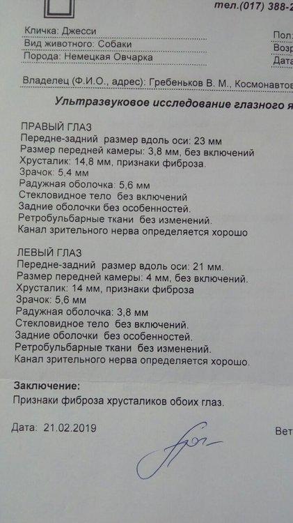 УЗИ ГЛАЗ.jpg